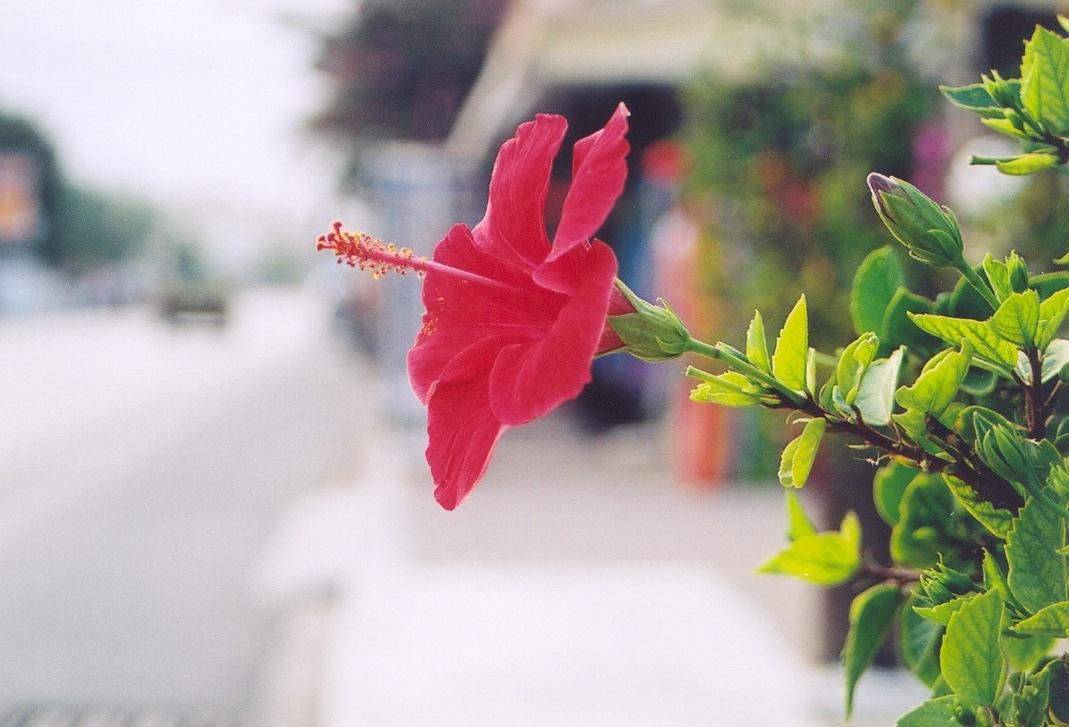 okrasne rostliny